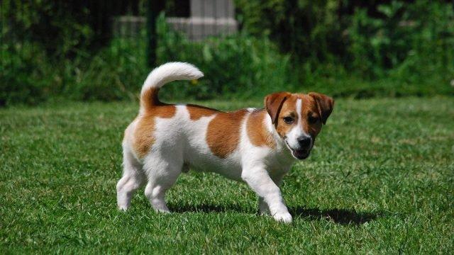 Собака гуляет по зелёной травке
