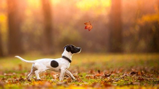 Собака на прогулке в осеннем лесу