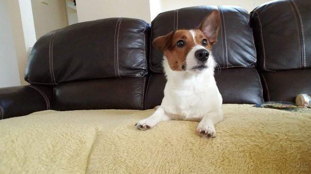 Собака отдыхает дома на диване