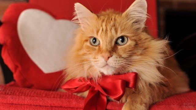 Котейка мейн-кун лежит на красном покрывале в красном бантике