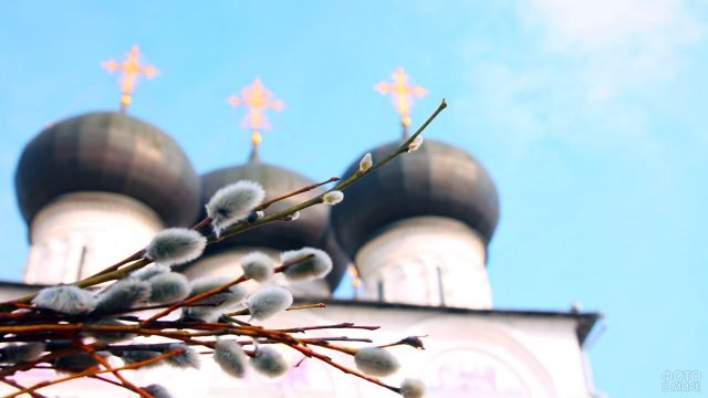 Веточки вербы на фоне куполов православного храма