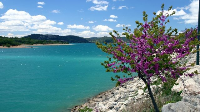 Цветущее деревце на европейском побережье