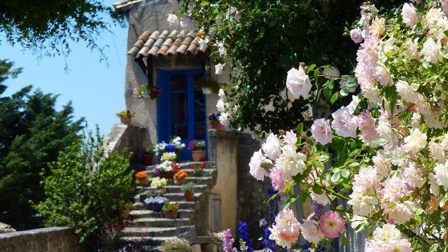 Цветущий розовый куст во дворе сельского домика в Провансе