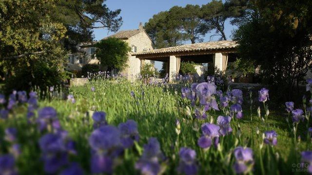 Голубые цветы во дворе замка
