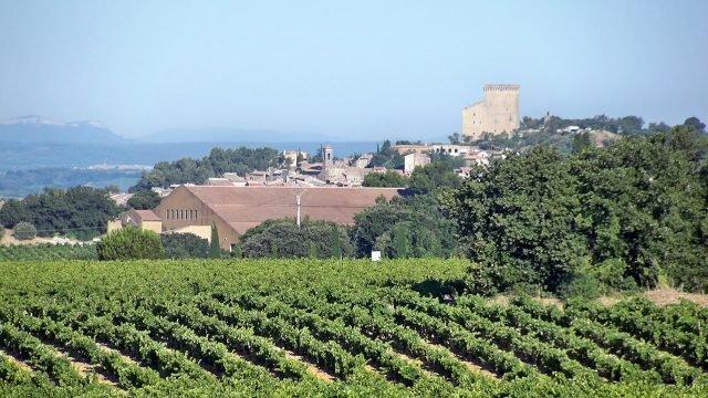 Виноградники в Шатонеф дю Пап в Провансе