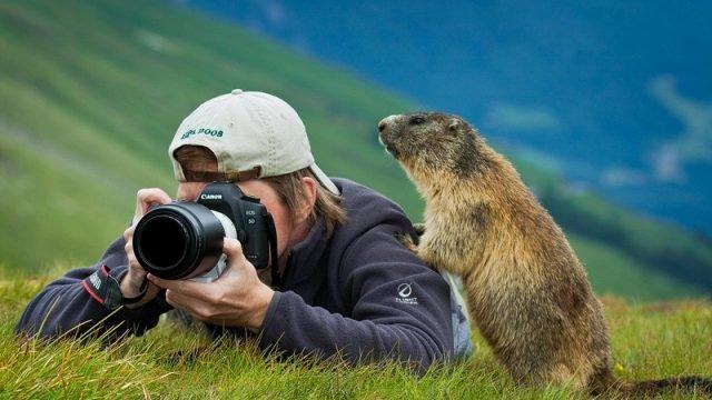Сурок залез к фотографу на плечо