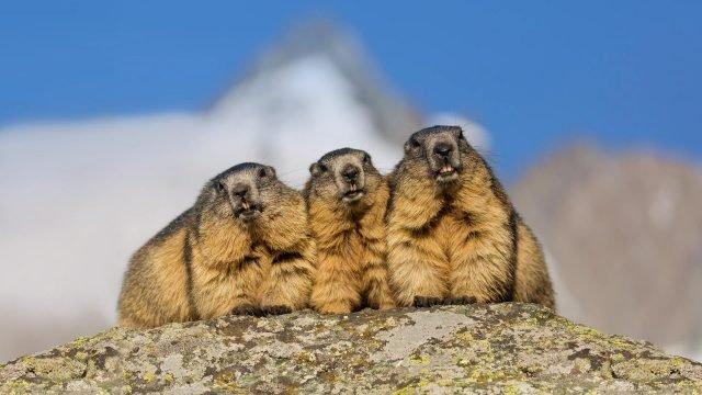 Три сурка на фоне неба