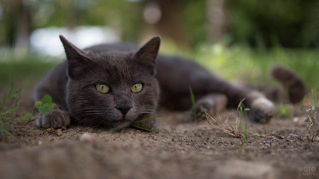 Котик лежит на земле с грустным взглядом