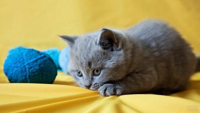 Маленькая русская голубая кошечка играет с клубками пряжи
