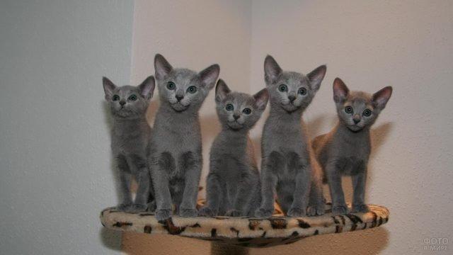 Пять котят сидят на подставке