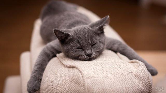 Русский голубой кот развалился на диване