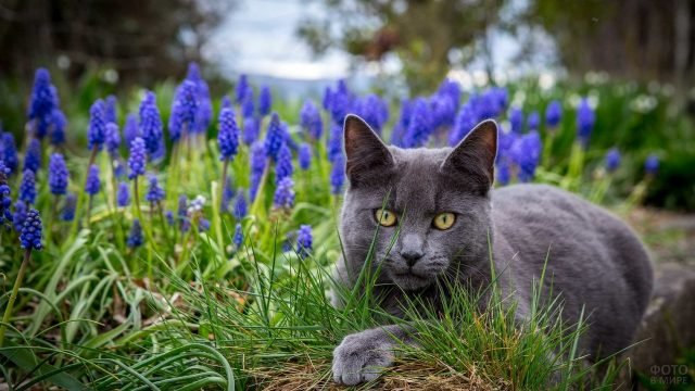 Серый котяра сидит в мускариях