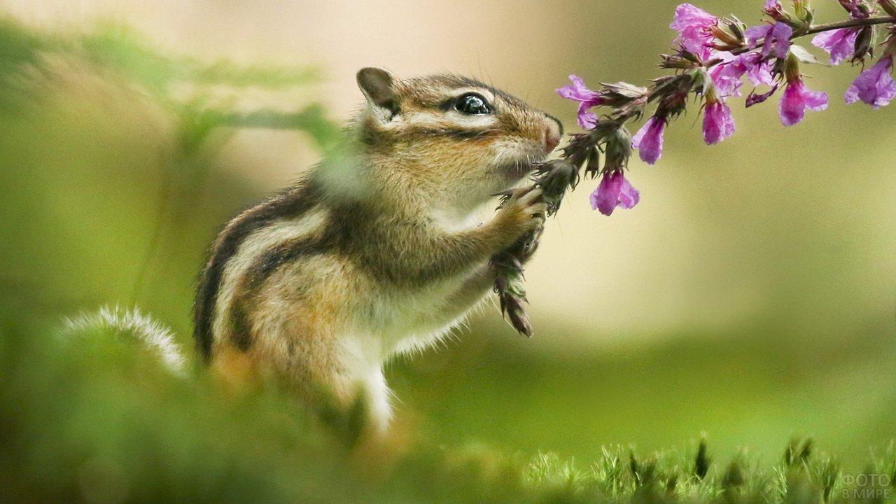 Бурундучок держит цветочек