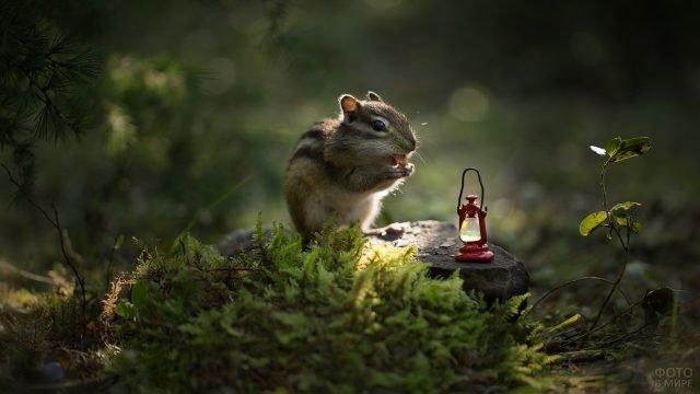 Сказочный бурундучок сидит рядом с фонариком