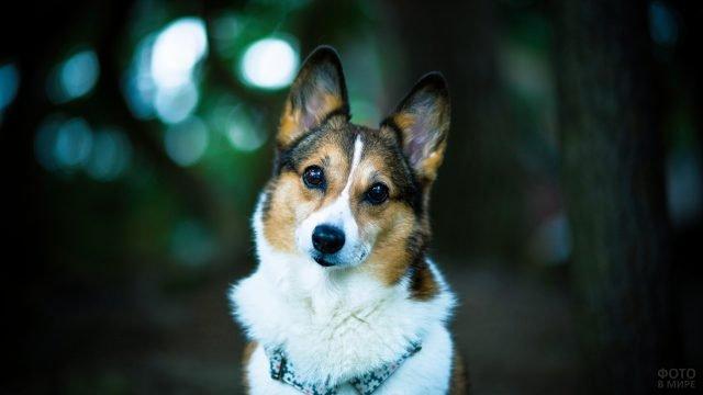 Красивый пёс в анфас