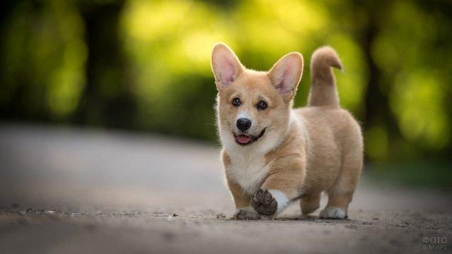 Милый пёс куда-то направляется