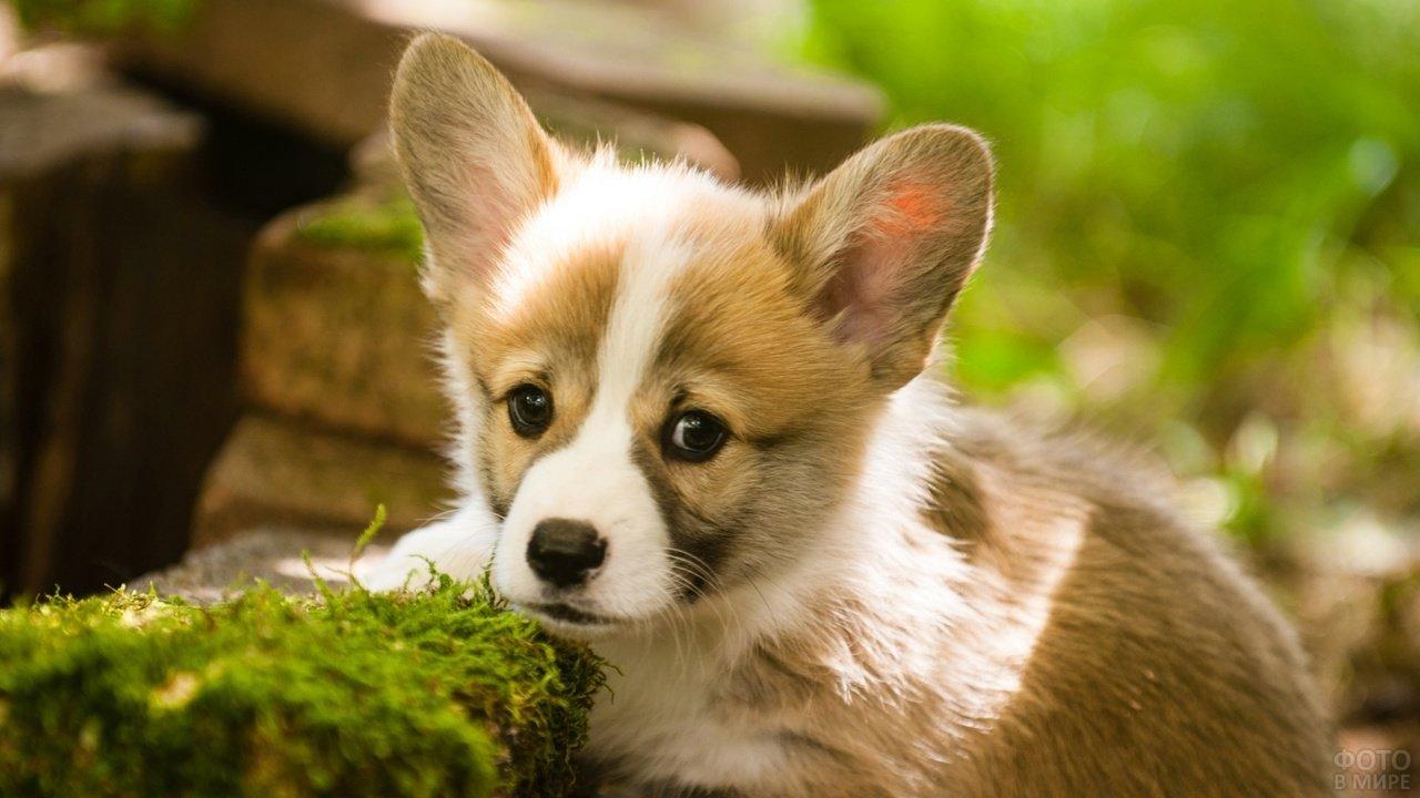 Милый щенок смотрит в камеру