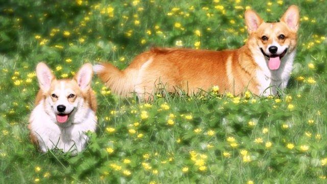 Пёсики на цветочной лужайке