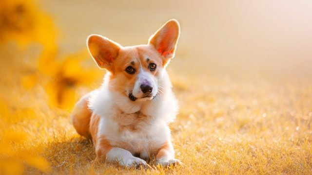 Собачка лежит на траве с грустным видом