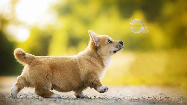 Собачка смотрит на мыльные пузыри
