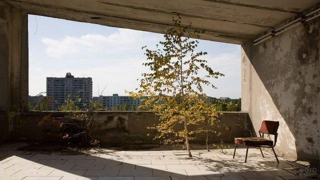 Дерево внутри заброшенного здания