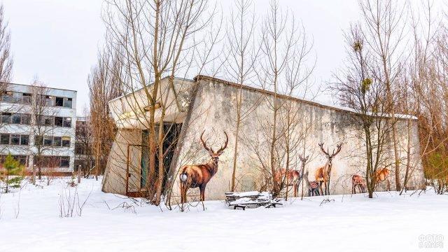 Граффити с оленями на здании в заброшенной Припяти