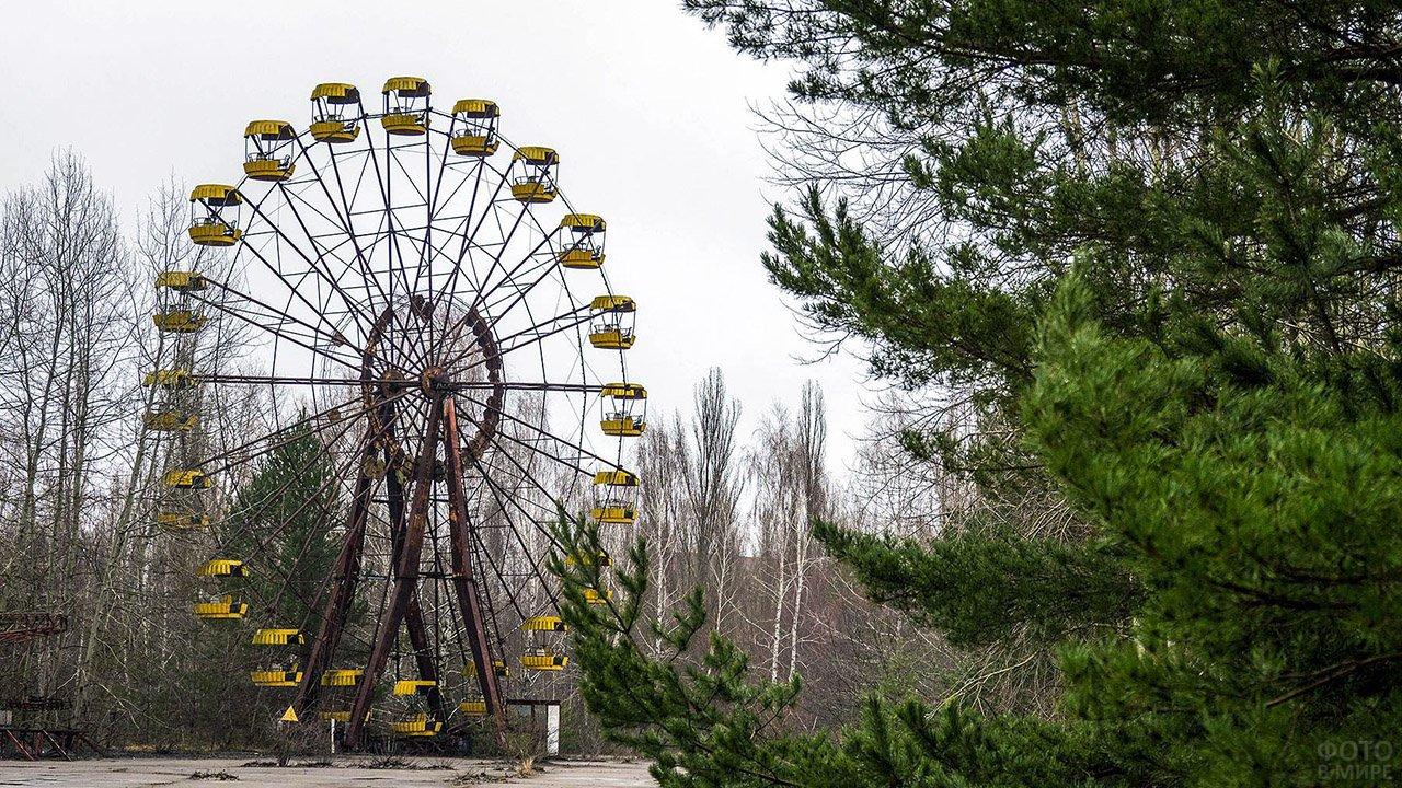 Колесо обозрения в заросшей лесом Припяти