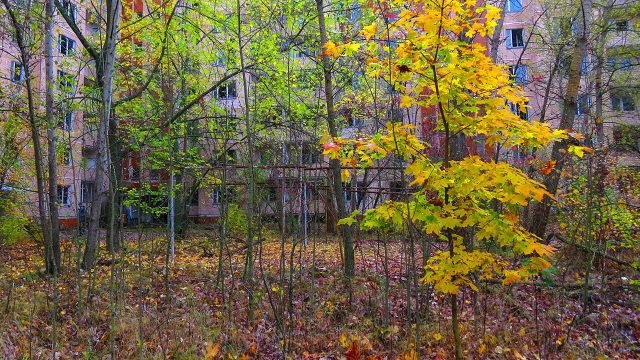 Лес во дворе некогда жилого дома в Припяти