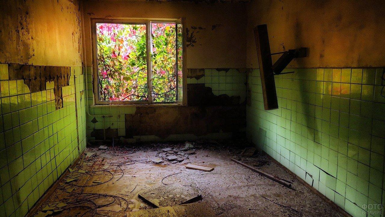 Осенний лес в окне заброшенного дома в Припяти