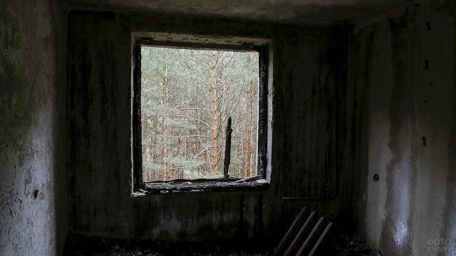 Вид на зелёный лес зоны отчуждения из окна заброшенного здания в Припяти