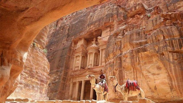 Проводник на верблюде на фоне храма