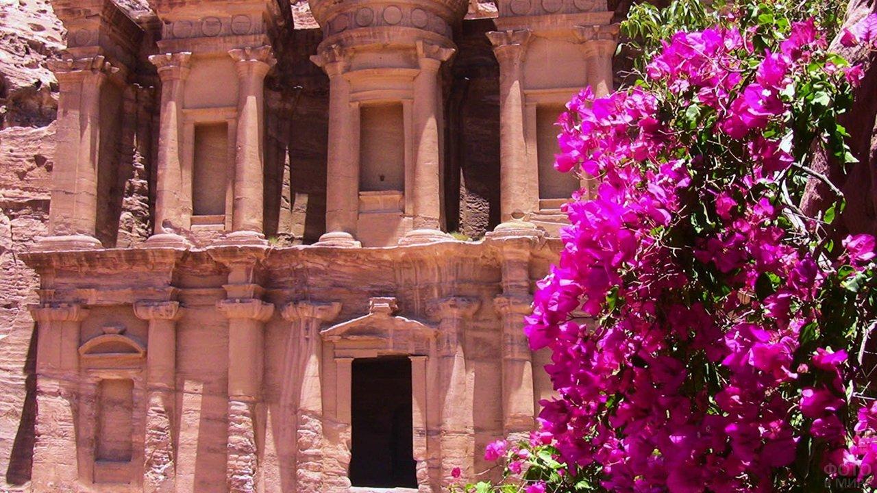 Розовые цветы на фоне храма
