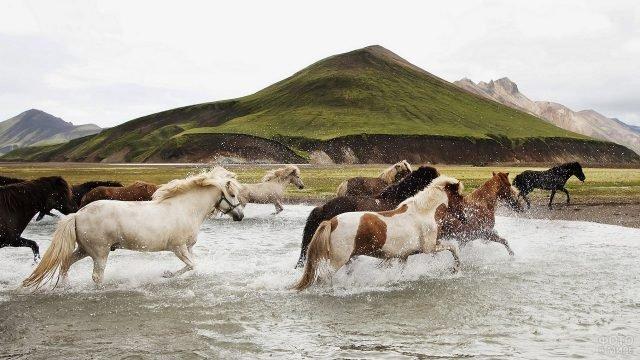 Лошади галопом проносятся через воду