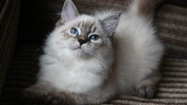 Молоденькая кошечка смотрит вверх
