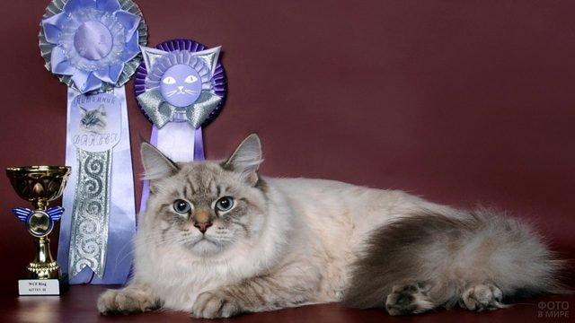 Невская кошка со своими наградами