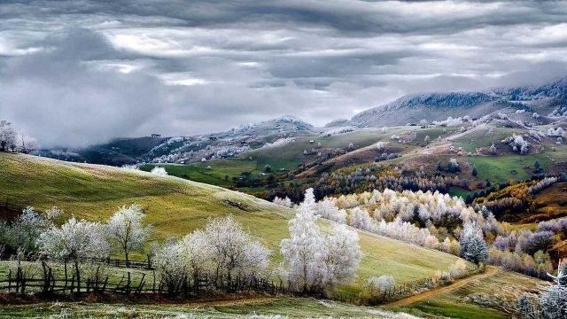 Заснеженные деревья между полями на холмах