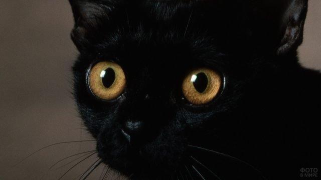Испуганные глаза чёрного котёнка