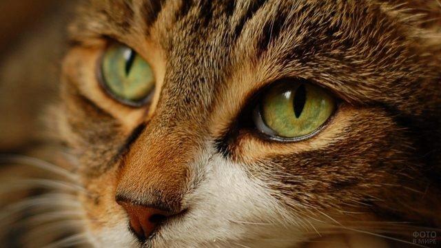 Киска с зелёно-жёлтым цветом глаз
