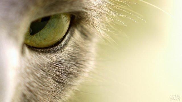Кошачий глаз крупным планом