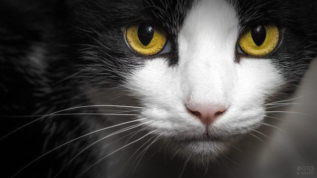 Кошечка с жёлтыми глазами