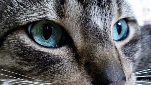 Кошка с бирюзовыми глазками