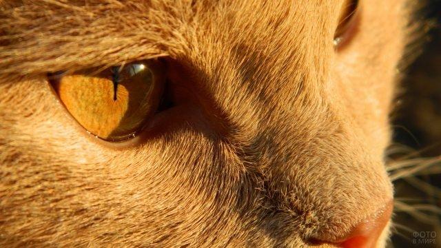 Кошкин глаз крупным планом