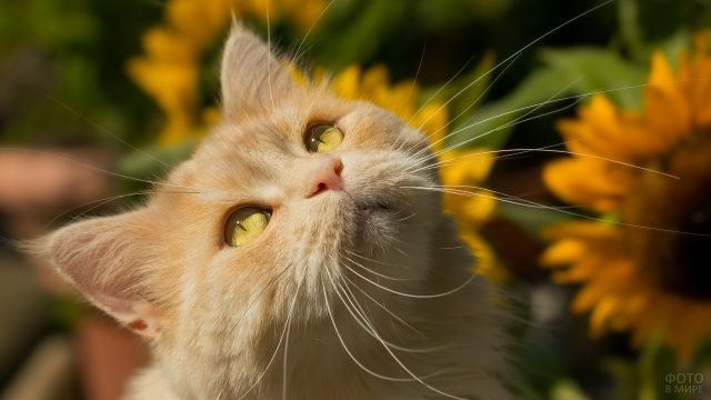 Котёнок с красивым цветом глаз