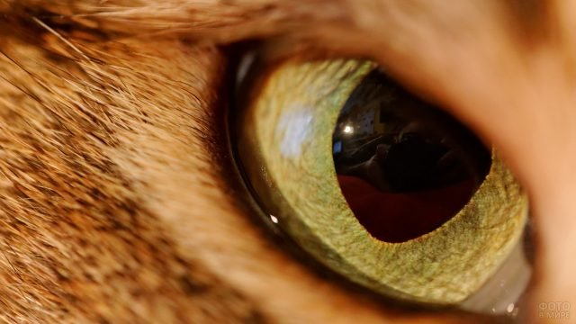 Отражение фотографа в глазу кошки