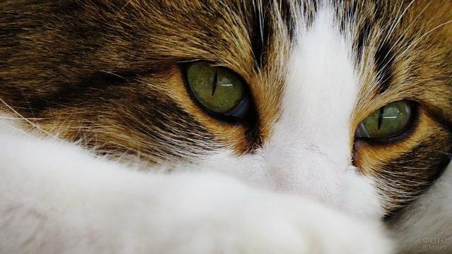 Рыженькая киска с зелёными глазами