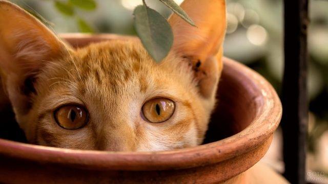 Рыжий кот выглядывает из горшка