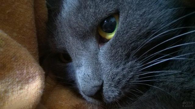 Серый котик с большими глазками