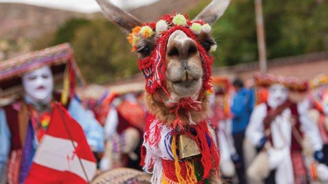 Лама наряженная в национальный костюм