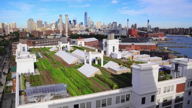 Большая ферма на крыше одного из небоскрёбов в Бруклине