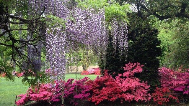 Цветение растений в Бруклинском ботаническом саду